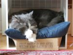 The Nappin' Box by Kitteh-Pawz