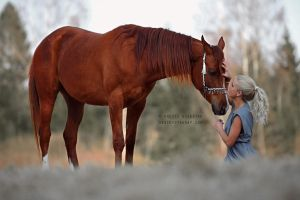 The Horse Whisperer by Hestefotograf