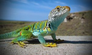 Green Lizard by JoelGafford