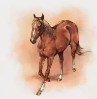 Ruby Red Quarter Horse by howlinghorse