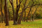 Fall Has Arrived by Doumanis