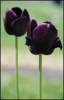 dark flowers by morho