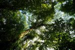 Cloud Forest, Costa Rica by Ericseye