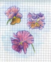 Flowers: pansy by RandomSearcher