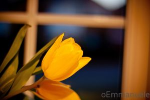 Tulips - Day 59 - 28/02/13. by oEmmanuele