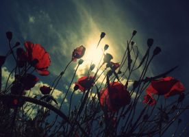 Poppies. by sasha-sunshine0