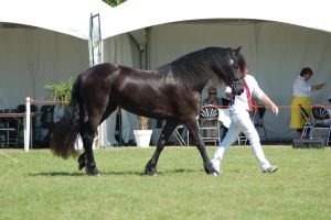 Friesian 8 by horse-power