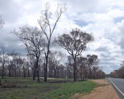 Recent Grassfire after Rain by tablelander