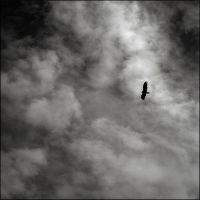I wish I could fly by aponom