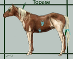 Topase by DA-Horse-Herd