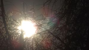 2014-10-23 17.15.57 sun though the trees by KenshinKyo
