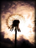 Seeds by this-is-the-life2905