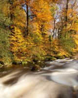 Autumn Rapid by Alex37