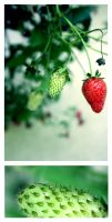 strawberry fields forever by ibas