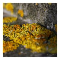 Little Lichen by MBKKR