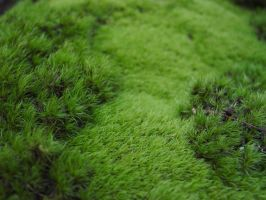 Quite Mossy Indeed by estesgraphics