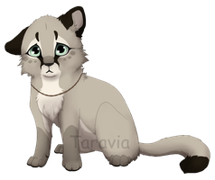 Cougar cub adoptable auction by TaraviAdopts