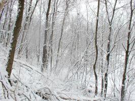 Winter Forest V by darchiel