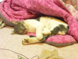 liitle sparky on my bed6 by Stormdeathstar9