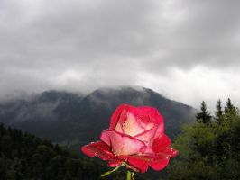 Rose and mountain by DragoonAthe