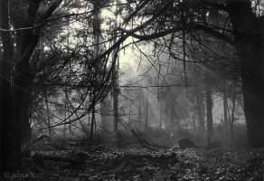 Dark Forest BW by nina-Y