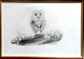 Baby Owl by YouWillBeSurprised