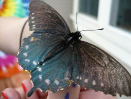 butterfly 1 by Defeet