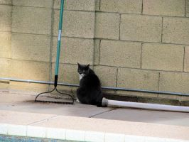Reggie the Stray Cat in the Backyard 3 by BigMac1212