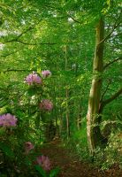 Rhododendron at Belvoir by Gerard1972