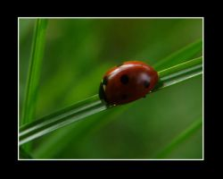 Ladybird 4 by Silorverion