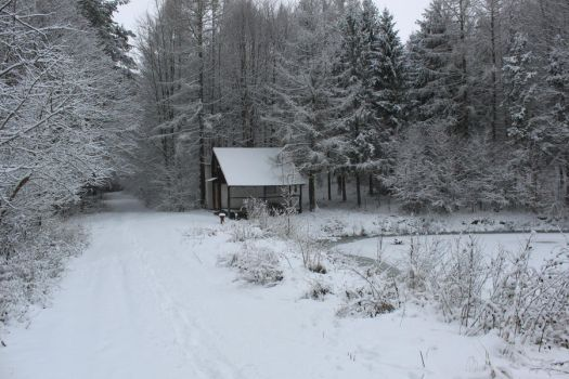 Winter forest and a cabin by YvaineGlareStock