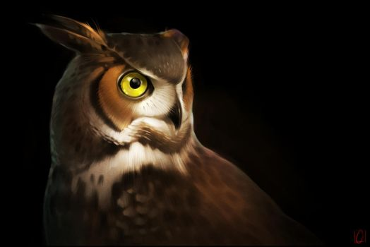 Portrait of owl by GaudiBuendia