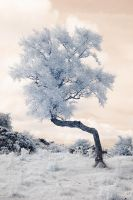 Infrared Kinky Tree by Okavanga