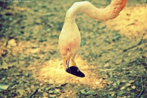 .Flamingo 3. by mysticmoon13