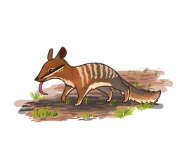 Numbat by Magicpawed