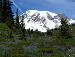 Another View of Mount Rainier by mit19237