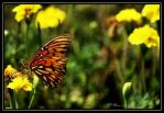 Butterfly and marigolds by eskimoblueboy