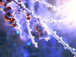 Cold morning light by Floreina-Photography