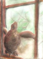 Freedom is a window away by chi171812