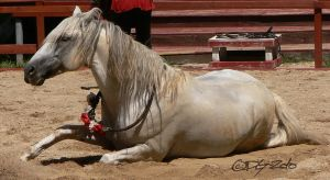 Andalusian Stallion - 38 by ElaineSeleneStock