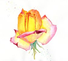 Rose by Annica22