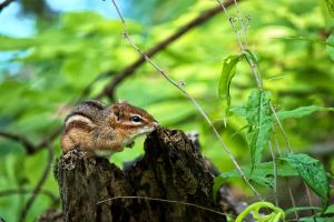 A Chipmunks World by shaguar0508