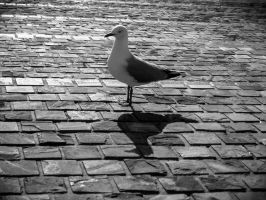 Seagull by sheeppy