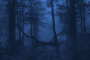 Misty Woods Premade 4 by Dreamworks-STOCK