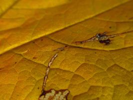 Autumn Leaf cut by a Snail Trail by Toderico