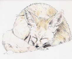 Fennec Fox by adriennefaye