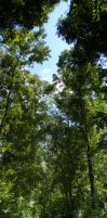 Canopy Cover by zachn