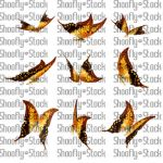 Butterfly Stock 15 by Shoofly-Stock