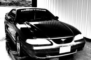 Mustang..... Mine... by Srod