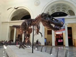 Night at the Chicago Museum. by simpspin